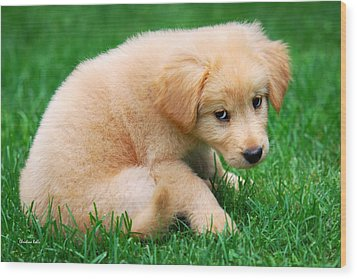 Fuzzy Golden Puppy Wood Print by Christina Rollo
