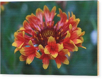 Wood Print featuring the photograph Gaillardia Flower by Keith Hawley