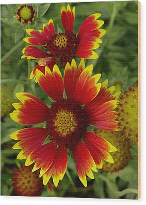 Wood Print featuring the photograph Gaillardia / Flowers by James C Thomas