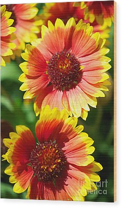 Wood Print featuring the photograph Gaillardia2x by Vinnie Oakes