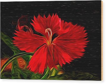 Galactic Dianthus Wood Print by David Kehrli