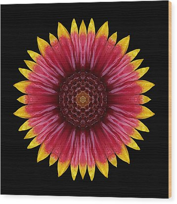 Galliardia Arizona Sun Flower Mandala Wood Print