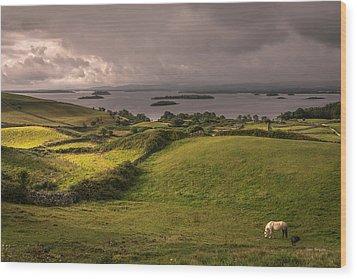 Galway Morning Wood Print by Tim Bryan