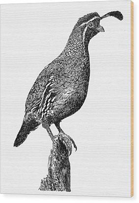 Gambel Quail Wood Print by Jack Pumphrey
