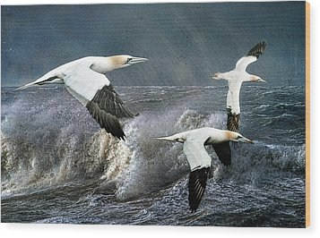 Wood Print featuring the photograph Gannets Skimming The Waves by Brian Tarr