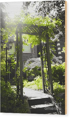 Garden Arbor In Sunlight Wood Print by Elena Elisseeva