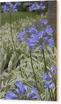 Wood Print featuring the photograph Garden Blue by Ivete Basso Photography