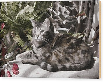 Wood Print featuring the digital art Garden Cat by Photographic Art by Russel Ray Photos