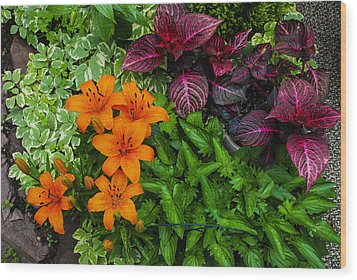Wood Print featuring the photograph Garden Colors by Phil Abrams