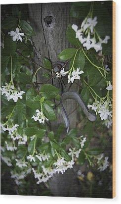 Garden Gate Wood Print by Judy Hall-Folde