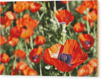 Wood Print featuring the photograph Garden Of Poppies by Lincoln Rogers