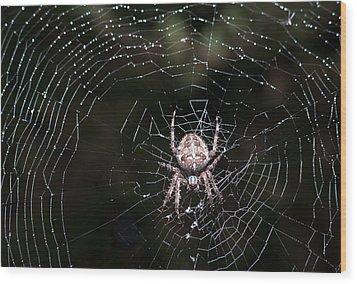 Wood Print featuring the photograph Garden Spider by Matt Malloy