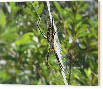 Garden Spider On Web Wood Print by MM Anderson