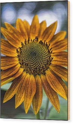 Garden Sunflower Wood Print