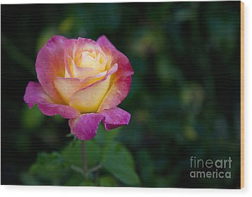 Wood Print featuring the photograph Garden Tea Rose by David Millenheft