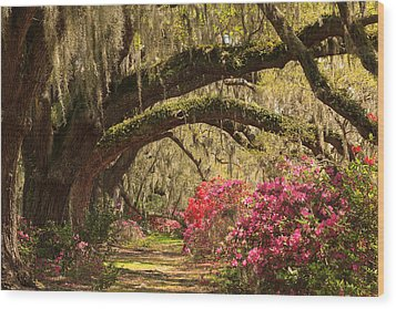 Garden View Wood Print by Patricia Schaefer
