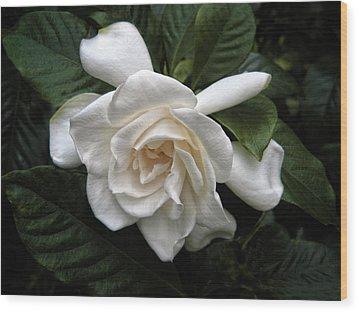 Gardenia Wood Print by Jessica Jenney