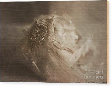 Garlic 1 Wood Print by Elena Nosyreva