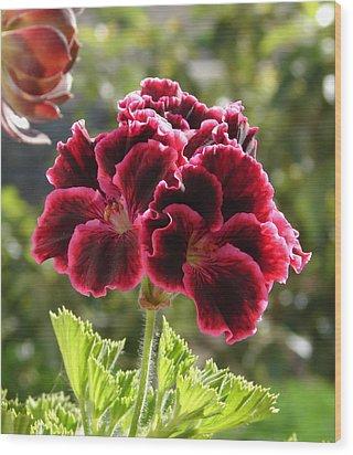 Wood Print featuring the photograph Garnet Geranium by Lew Davis