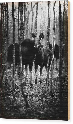 Gathering Of Moose Wood Print by Bob Orsillo
