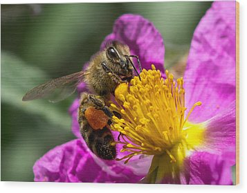 Gathering Pollen Wood Print