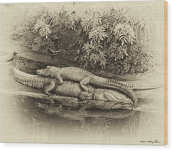 Gator Back Ride Wood Print by Kathy Ponce