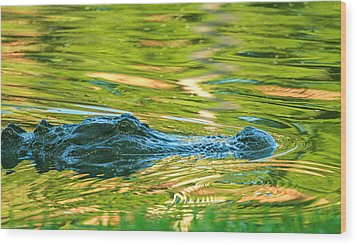 Gator In Pond Wood Print by Patricia Schaefer