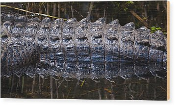 Gator Reflection Wood Print by Adam Pender