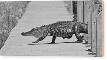 Gator Walking Wood Print
