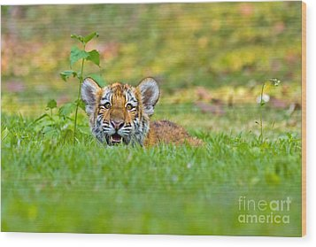Gauging The Distance Wood Print by Ashley Vincent