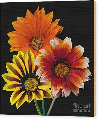 Wood Print featuring the photograph Gazania Variety by Shirley Mangini