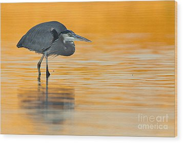 Wood Print featuring the photograph Gbh In Orange Water by Bryan Keil