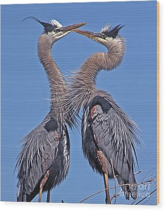 Great Blue Heron The Face Off Wood Print by Larry Nieland