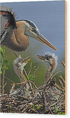Great Blue Heron Twins Wood Print by Larry Nieland