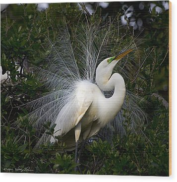 Wood Print featuring the photograph Geat Egret Mating Dance I by Kathy Ponce