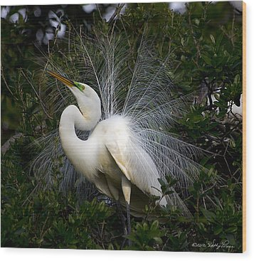 Geat Egret Mating Dance II Wood Print by Kathy Ponce