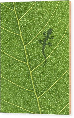 Gecko Wood Print by Aged Pixel