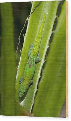 Gecko Wood Print by Mike Herdering