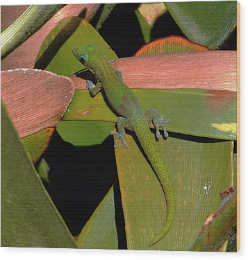 Gecko Wood Print by Pamela Walton