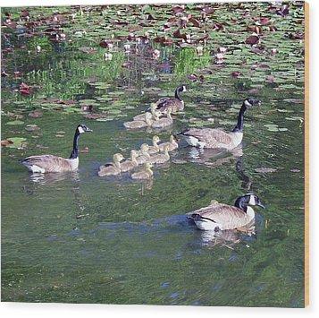Geese And Goslings Wood Print