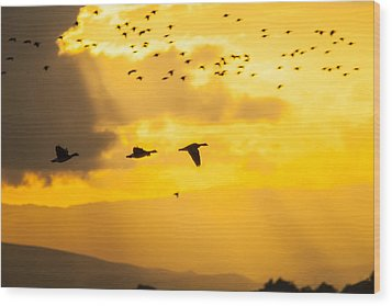 Geese At Sunset-2 Wood Print
