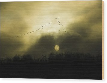 Geese At Sunset Wood Print