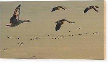Geese Charter Wood Print