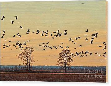 Geese In Flight I Wood Print by Debbie Portwood