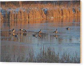 Geese In Wetlands Wood Print