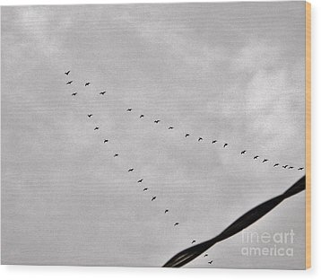 Geese Wood Print by Judy Via-Wolff