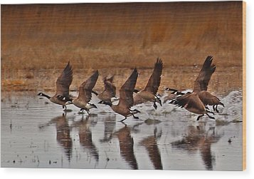 Wood Print featuring the photograph Geese On The Run by Lynn Hopwood