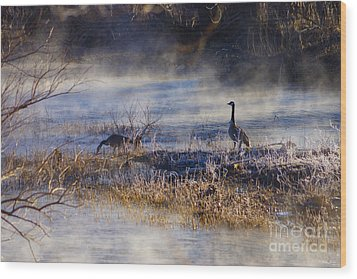 Geese Taking A Break Wood Print