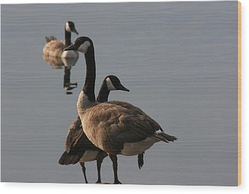 Wood Print featuring the photograph Geese Twister by Paula Brown