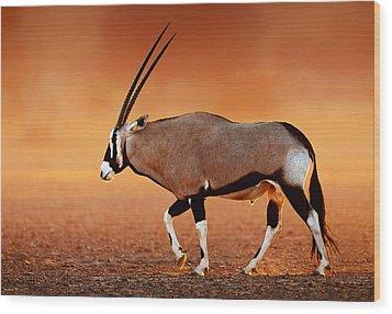 Gemsbok On Desert Plains At Sunset Wood Print by Johan Swanepoel